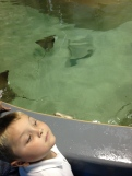 Son before feeding the manatees.